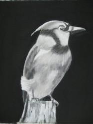 #62 CHARCOAL BIRD1 6X6